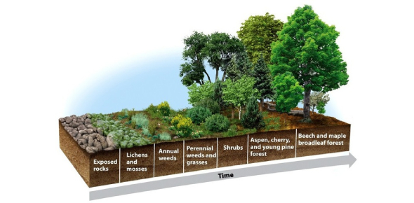 Ecological Succession Trivia Quiz!