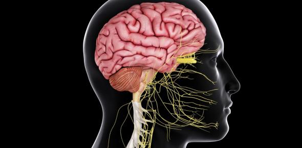 Central Nervous System Quiz Exam!