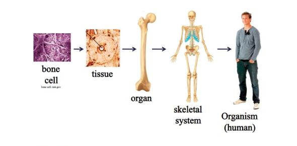 Skeletal System Concepts Quiz!