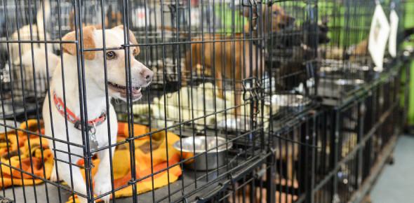 Animal Shelter Trivia Quiz: MCQ!