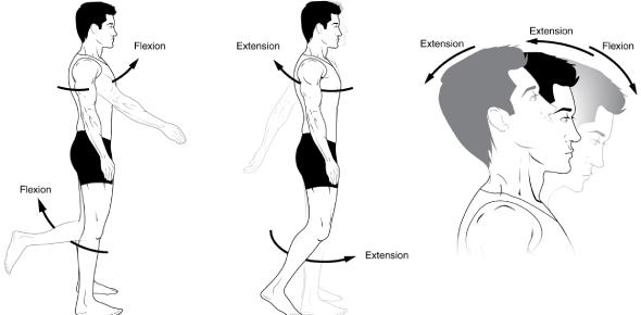 Body Movements MCQ Quiz! Exam