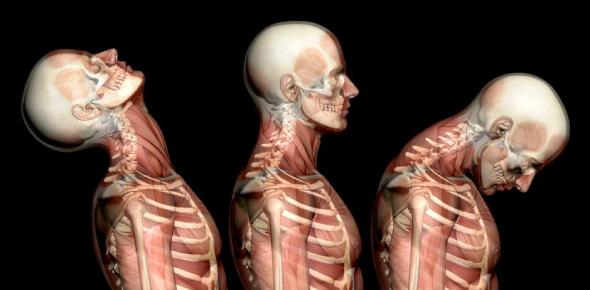 Anatomy Trivia Quiz: Mock Test!