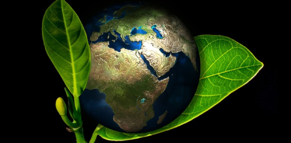 BVHS Ecology Quiz: Trivia!