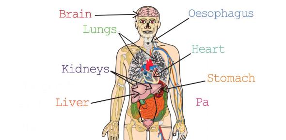 Human Biology Exam Questions: Quiz!