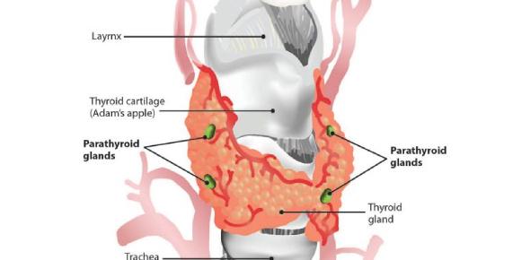 Hypoparathyroidism And Hyperparathyroidism: Quiz!