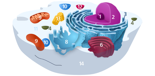 Cell Processes And Functions