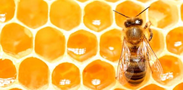 Honey Bees And Honey! Amazing Trivia Facts Quiz