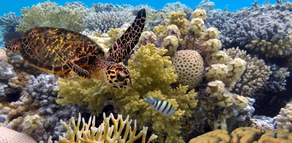 Great Barrier Reef! Trivia Facts Quiz!