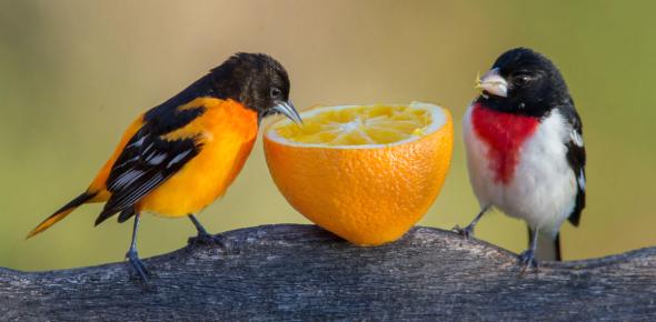 A Quiz About Birds!