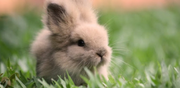 Are You A Fluffy Bunny??