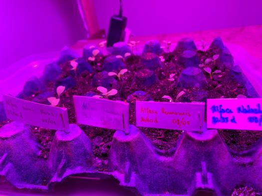 Cultivo Indoor: Teste Seus Conhecimentos