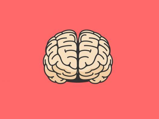 Capabilities Of The Human Brain.