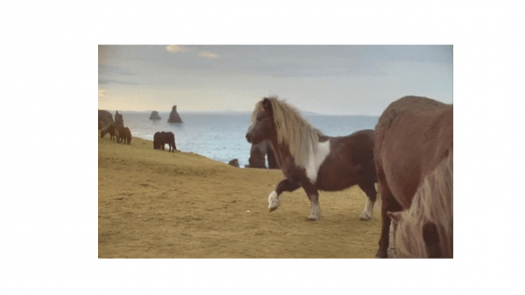 The Horse In Action Quiz