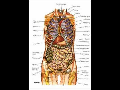 Anatomy By: Ahmad Tawalbeh & Wala