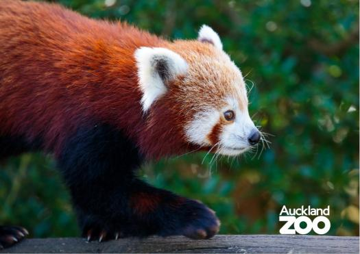 Red Panda - True Or False