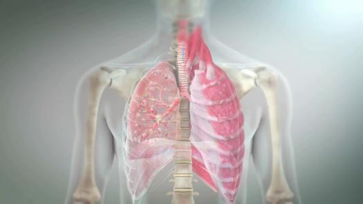 Drugs Acting On Respiratory Tract