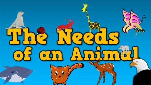Year 1 Basic Needs Of Animals