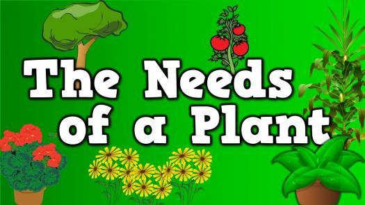 Year 1 Basic Needs Of Plants