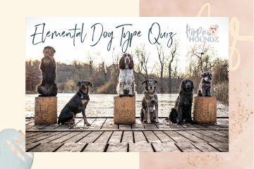 Elemental Dog Type Quiz