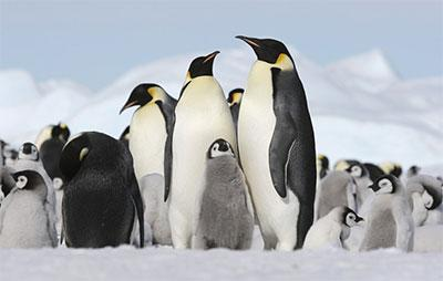 Antarctica - Australia & New Zealand