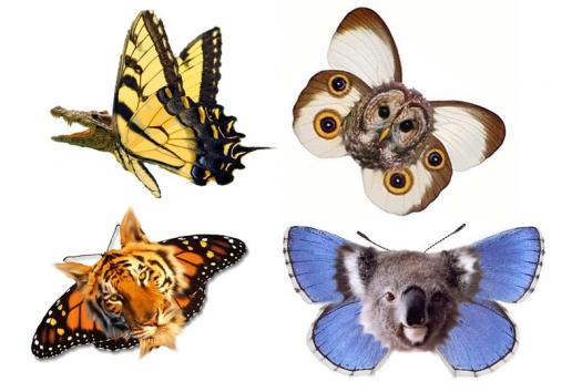 What Kind Of Catbutterfly Are You?
