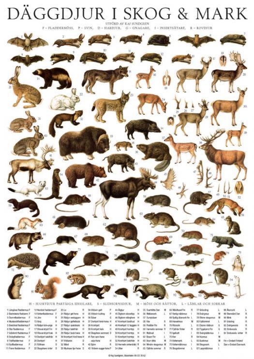 D�ggdjur (klass Mammalia)
