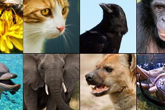 Top 10 Most Intelligent Animals Quiz