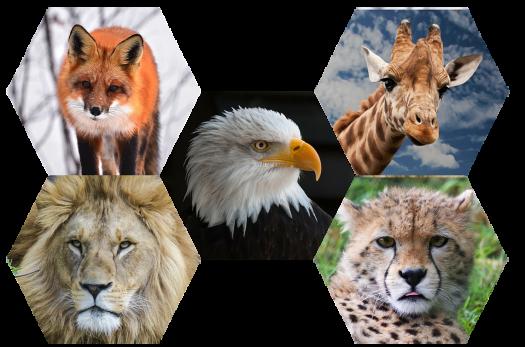 Quiz: Animal Spirit In You!