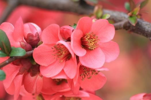 care Este Floarea Ta De Primvar?