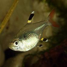 Fish, Amphibians, And Reptiles Quiz