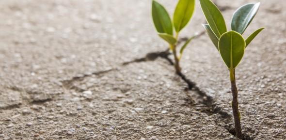 How do plants break through concrete?