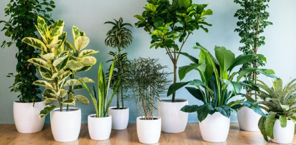 What are some indoor plants that don't need any sunlight?