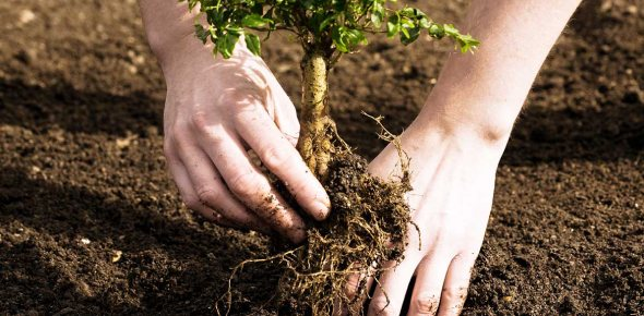 Why humans have not been able to make energy like plants do?