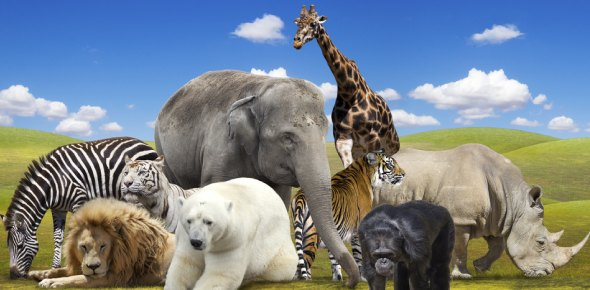 Who is known as the world's most beautiful animal?