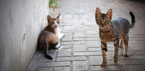 Whose cat will be the fastest and most obedient (in the case below)?
