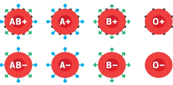 What are the different types of blood groups?