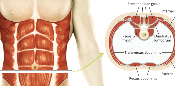 What structure is formed by the contribution of the internal oblique abdominis muscle in a patient with an emergent hernia?