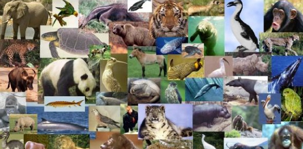 Which of the following environments would you expect to have the most biodiversity?