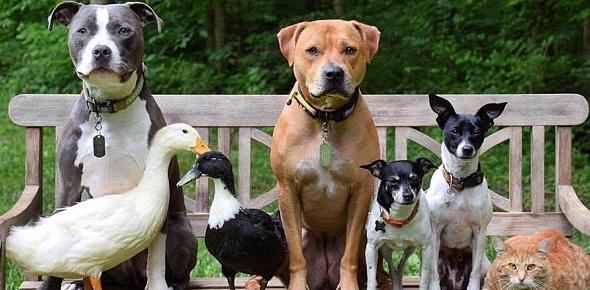 What family of animals do dogs belong to?