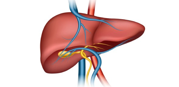 Which of the following is NOT a function of the liver? - ProProfs
