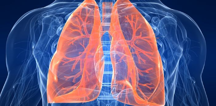 Lungs are a vital part of our body. They hold our air and are integral to how we breathe. If there