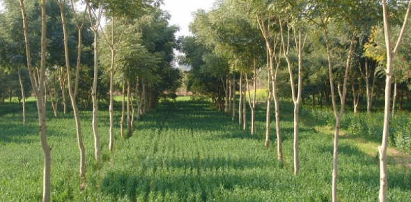 There are a myriad of advantages of agroforestry which is why it is becoming more popular. The