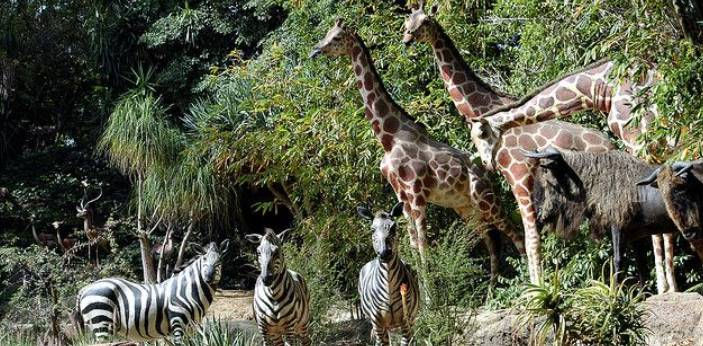 There are some animals that are known to live in herds because they know that they can live better