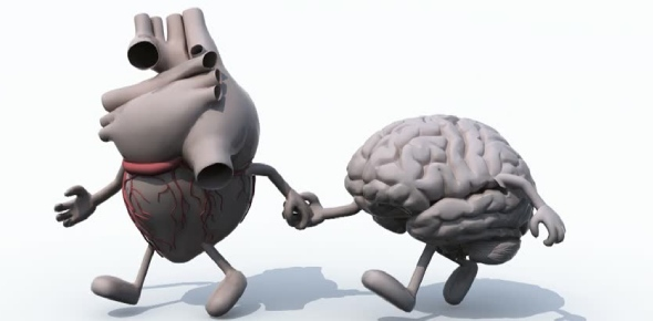 What is the connection between human heart and brain?