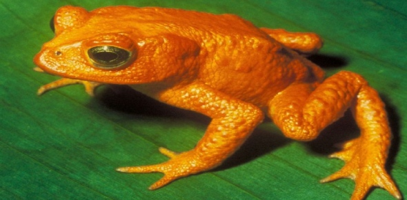 Can a species be saved after it reaches 'functional extinction'?