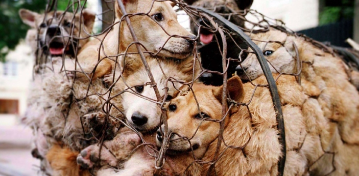 Every year, there are tens of thousands cases of animal abuse. When witnessing animal abuse, many