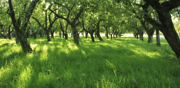 Agroforestry is a land use system in which perennial crops is grown with agricultural crops or