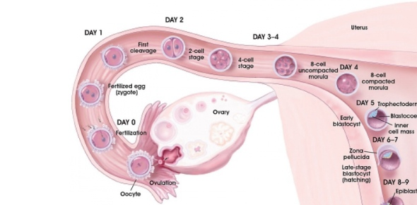 What is the common normal site of nidation/implantation in the uterus?