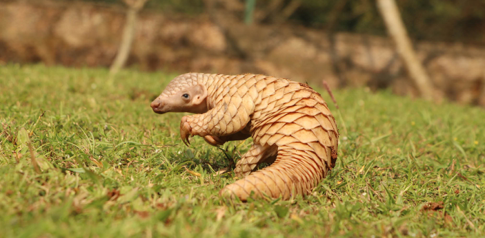 Anteaters and pangolins are the only two mammals that don't have teeth. Both animals have