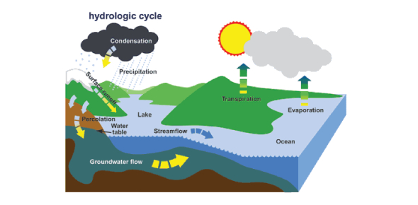 What is the process of the hydrologic cycle?